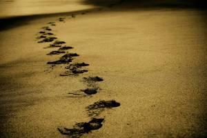 Abbildung: Spuren im Sand